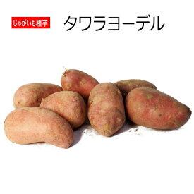 じゃがいも タワラヨーデル 種芋 500g ジャガイモ 【ラッキーシール対応】