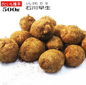 さといも 石川早生 種芋 500g サトイモ 里芋
