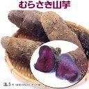 ヤマイモ(芽出しポット苗)・むらさき山芋10.5cmLポット苗