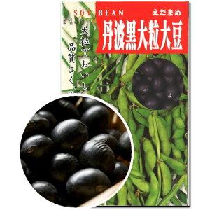 大豆 種子 丹波黒大粒大豆 60ml