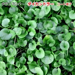 グランドカバー 種子 タキイ種苗 ダイカンドラ(コート種子)(およそ1m2分) 20ml