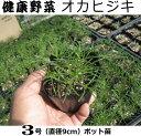 オカヒジキ苗(健康野菜)