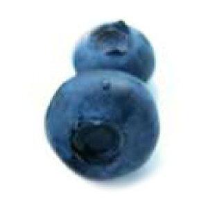 南米チリ産ブルーベリー(冷凍)500g