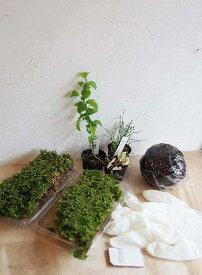 苔玉作成キット 植物苗がついている 苔玉キット 苗付(ミニ苗3つ) 手作り 初心者 こけだまの材料 かんたん作成キット 苗・苔・苔玉用に配合した土・糸・作り方のしおりセット・樹種別育て方のしおりセット
