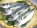 【鮮魚】天然鯵〈アジ〉【定置網】1Kg前後、2〜5匹前後