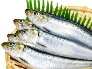 【鮮魚】鰯〈イワシ〉1Kg前後、8〜15匹前後