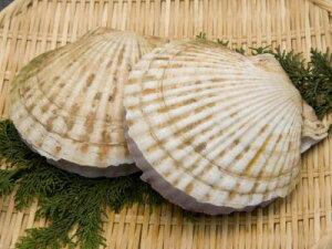 【鮮魚】国産帆立貝〈ホタテガイ〉2S5枚、700g前後