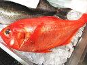 【鮮魚】金目鯛〈キンメダイ〉1匹、1Kg〜2Kg前後
