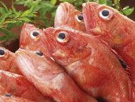 【鮮魚】キンキ1匹、200g〜500g前後