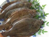【鮮魚】真子鰈〈マコカレイ〉1匹、200g〜500g前後