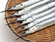 【鮮魚】細魚〈サヨリ〉小1Kg前後、14〜16匹前後