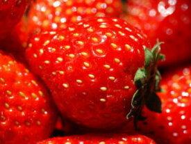 苺〈イチゴ〉【関東系】1パック、300g前後、15〜26粒前後