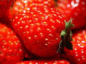 苺〈イチゴ〉【国産】1パック、300g前後、15〜26粒前後