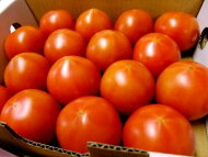 フルーツトマト『アメーラトマト』1ケース、9〜13個前後、1Kg前後