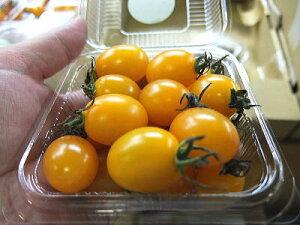 黄色系ミニトマト『アイコ』1パック、15〜20個前後、100g〜200g前後