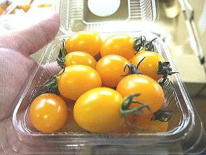 黄色系ミニトマト『アイコ』1ケース、10パック前後、1Kg〜2Kg前後