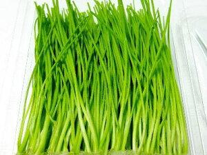 芽葱〈メネギ〉別称:姫葱〈ヒメネギ〉1パック、50g前後