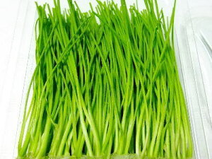 姫葱〈ヒメネギ〉別称:芽葱〈メネギ〉1ケース、30パック前後、1.5Kg前後