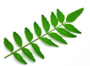 木の芽〈キノメ〉別称:山椒の葉〈サンショウノハ〉1パック、10g前後、30〜60枚前後