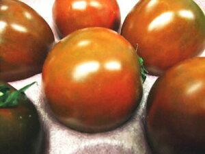 黒色系トマト1個、140g〜230g前後