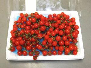 マイクロトマト〈赤〉1ケース、20パック前後、2Kg前後