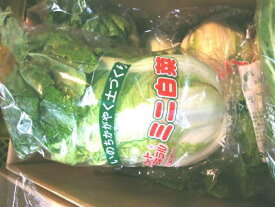 ミニ白菜〈ミニハクサイ〉1個、0.3Kg〜1Kg前後