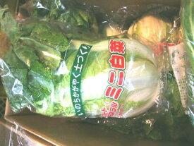 ミニ白菜〈ミニハクサイ〉1ケース、10個前後、3Kg〜10Kg前後