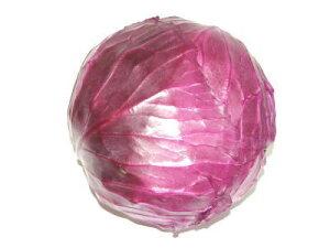 赤キャベツ〈アカキャベツ〉別称:紫キャベツ〈ムラサキキャベツ〉1個、0.5Kg〜1.2Kg前後