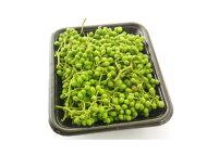 山椒の実〈サンショウノミ〉1パック、30g〜100g前後
