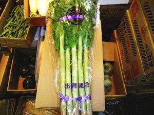 チシャトウ別称:茎レタス〈クキレタス〉1ケース、9Kg〜15Kg前後6束前後