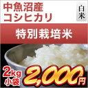 29-n-uo-koshi-2