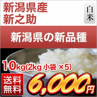 30年産 新潟県の新ブランド 新之助 白米 10kg(2kg×5袋)【送料無料】