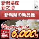 30 nii shinnosuke 10