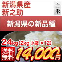 30 nii shinnosuke 24