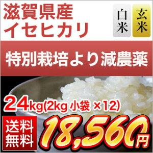新米 令和元年 (2019年) 滋賀県産 イセヒカリ24kg(2kg×12袋)【減農薬】【送料無料】【白米・玄米 選択】