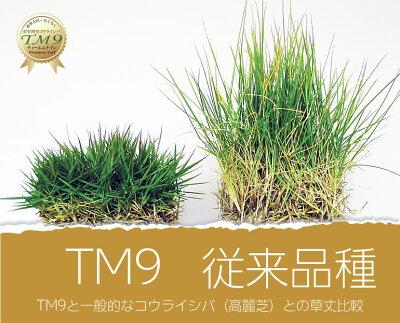 芝生TM9ティーエムナイン(改良型高麗芝)2平米手入れが楽・簡単で見た目もキレイな芝生楽天市場芝生ジャンル連続1位獲得中やっぱり人工芝より天然芝ガーデニングDIY