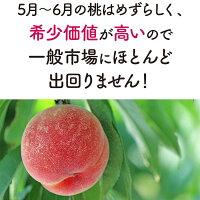 桃ももはなよめ1.8kg送料無料モモ白桃極早生ハウス栽培希少フルーツギフト父の日内祝い
