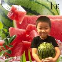 母の日入学祝いフルーツ果物熊本県産小玉スイカ1玉入り送料無料農家直送産地直送国産フルーツ果物のし対応可大嶌屋(おおしまや)