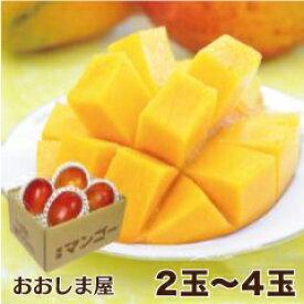 完熟 マンゴー 送料無料 (2玉-4玉入り)アップルマンゴー 産地直送 農家直送 国産 大小混合 家庭用 食品 果物 フルーツ 大嶌屋(おおしまや)