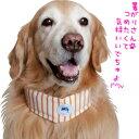 ソフトジェルクールバンダナ 冷えひえボーダー【大型犬向け暑さ対策グッズ】<あす楽対応>