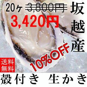 ★スーパーセール10%OFF★坂越産 殻付き 牡蠣 20ヶ [送料無料]生食OK★加熱しても縮みません!旨みたっぷり、甘くて濃厚な!坂越 スーパーセール 生牡蠣