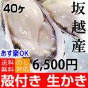 ★あす楽対応!お歳暮ギフトにも★坂越産 殻付き 牡蠣 40ヶ [送料無料]生食OK★今は少し小ぶりです。臭みがなく食べや…