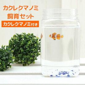カクレクマノミ 飼育セット (カクレクマノミ付き) ボトルアクアリウム マリン2 水槽 小型 ボトル アクアリウム ペット アクア 魚 観賞魚 海水魚
