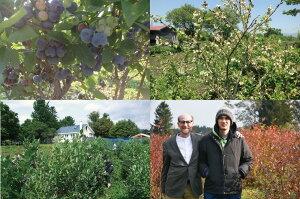 無農薬冷凍ブルーベリー1kg(1kg×1袋)北海道北斗自然栽培原料送料無料産地直送ハウレット農園