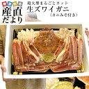 超大型の生ズワイガニ(カニみそ付) まるごと1尾 解体 約1キロ 送料無料 生ズワイ蟹 生ずわい蟹 カニ鍋 産直…