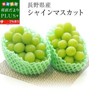 送料無料 長野県産 シャインマスカット  青秀品 500g×2房 化粧箱 ぶどう 葡萄 ブドウ マスカット