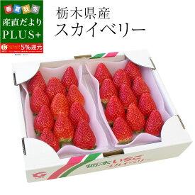 栃木県産 スカイベリー DXタイプ 1箱 (300g×2パック) (6粒から12粒×2P) 送料無料 いちご 苺