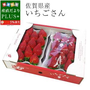 佐賀県産 新 ブランド苺 いちごさん 秀品 3Lから2Lサイズ 1箱 約540g (270g×2パック) 送料無料 イチゴ