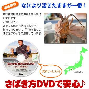 伊勢海老のさばき方DVD