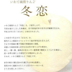 ご予約 岩手 純情りんご 新品種林檎 白いリンゴ 冬恋 2.5kg